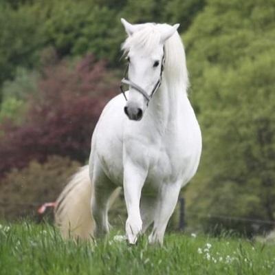 Pferde und Bachblüten