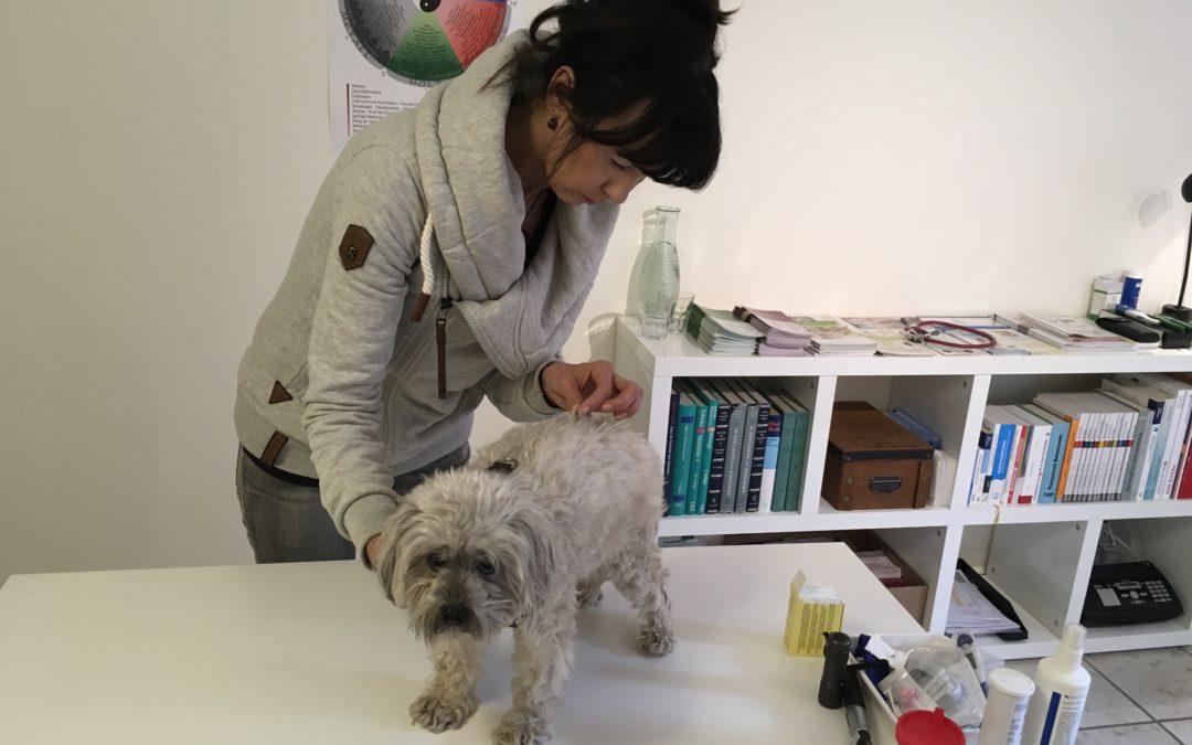Akupunktur – helfen Nadeln auch bei unseren Tieren?